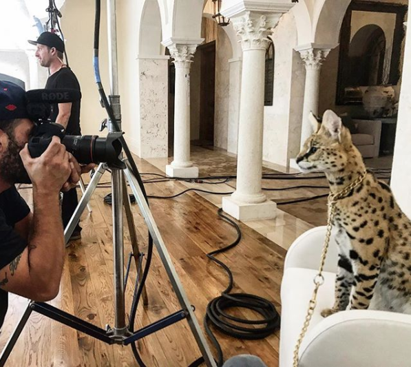 From Rescue Cat to Instagram Star: Stryker The Cat - L'Etage